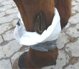 einschuss pferd behandlung rivanol